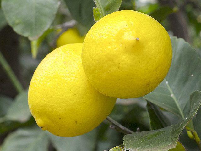 wimbish-w-lemons