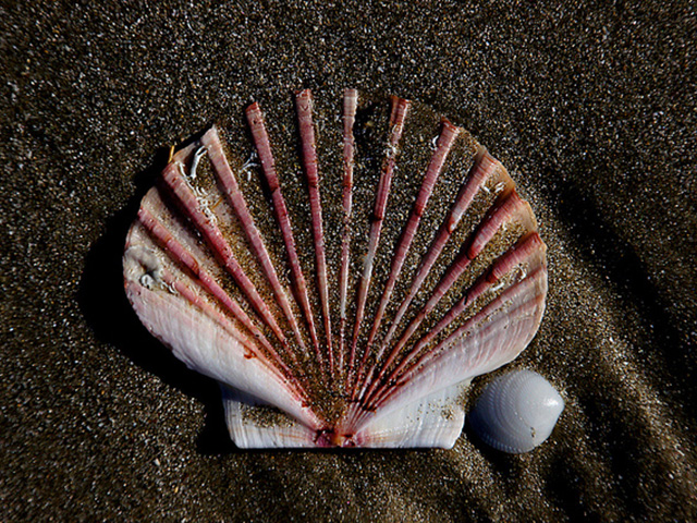 the-solitary-seashell